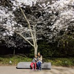 Spring Break Road Trip from Chicago to Cherry Blossom Festival, Washington D.C.